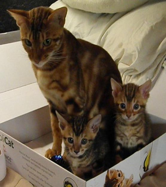 www cranberrycoastcats com